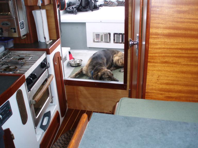 Galley and dog